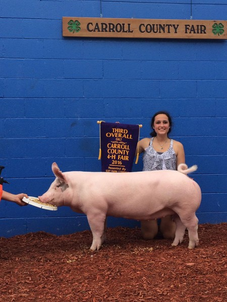 3rd Overall Gilt & Reserve Champion Cross Gilt