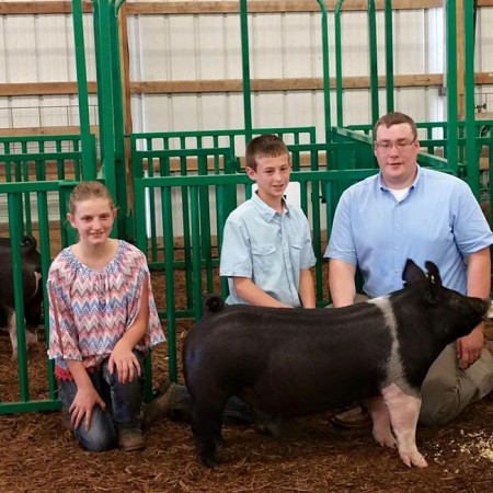 3rd-Overall-Barrow---2015-Wabash-County-Classic---Sired-by-Outlaw---Bred-by-Shaffer's---Shown-by-Vade-Dishman---Online-Purchase