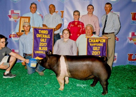 3rd Overall Gilt & Champion Hampshire Gilt
