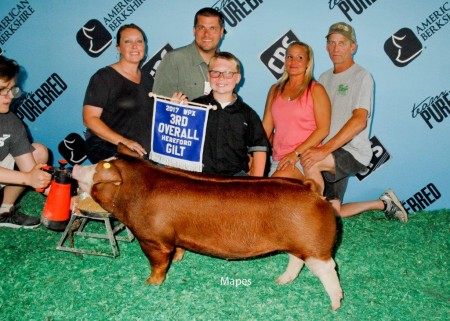 3rd Overall Hereford Gilt