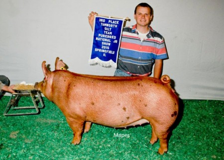 3rd-Overall-Tamworth-Gilt-2015-Team-Purebred---Record-Breaker---Mitchell---bred-by-us