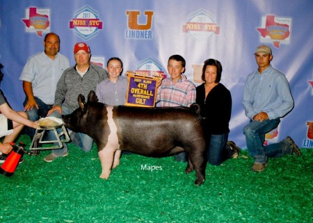 4th Overall Hampshire Gilt
