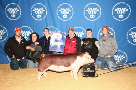 4th Overall Hereford Gilt 2017 OYE
