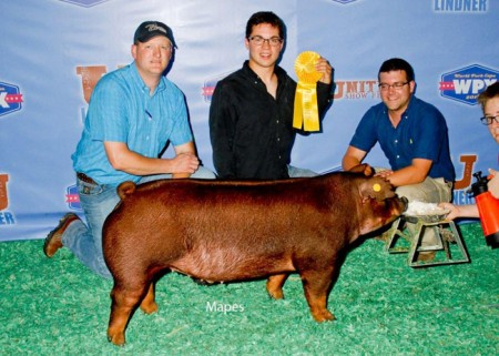 5th Place Duroc Barrow Division 1