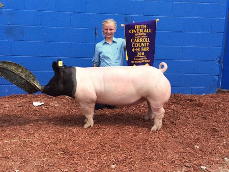 5th Overall Gilt & Reserve Crossbred Gilt