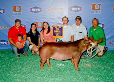 5th Overall Duroc Gilt