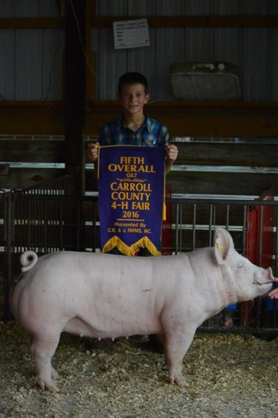5th Overall Gilt & Champion Yorkshire Gilt