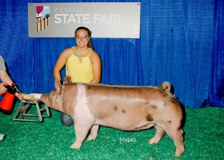 Champion Division 1 Crossbred Gilt