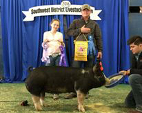 Grand Champion Breeding Gilt