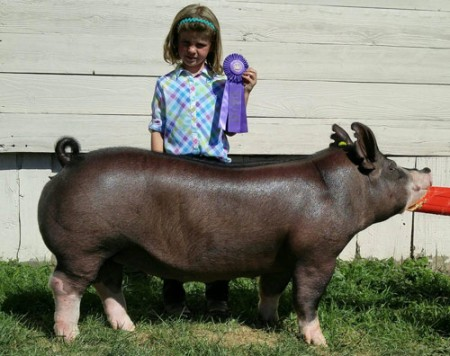 Champion-Berkshire-gilt-2015-Washington-County-Fair,-PA-Black-Oak---bred-by-Gottschalk---shown-by-Allison-Litman-(purchased-from-CAS---Res-Berk)
