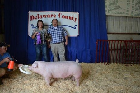 Champion-Chester-Barrow---2015-Delaware-Co---sired-by-Si---shown-by-Taylor-Ward---bred-by-Rob-Jordan---purchased-at-CAS-1