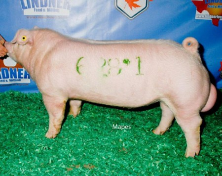 Champion-Chester-Boar-2015-Fall-Classic---Rush-Hour---bred-by-Us