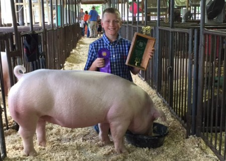 Champion-Chester-Gilt---2015-Tipton-Co-Fair---shown-&-bred-by-Rob-Jordan-&-Family