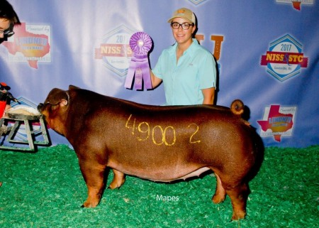 Division 1 Champion Duroc Gilt & Class 4 Winner