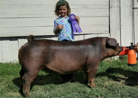 Champion-Duroc-Gilt-2015-Washington-Co-Fair,-PA---Black-Jack---shown-by-Allison-Litman