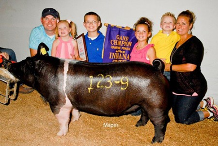 Champion-Hampshire-Gilt-Open-Show---IN-State-Fair---Outlaw---shown-by-Jeff-Rodibaugh-&-Fam---Harvey's
