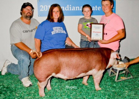 Champion-Hereford-Barrow---2015-IN-State-Fair---sired-by-Family-Guy---Klopfenstein---Mapes-2
