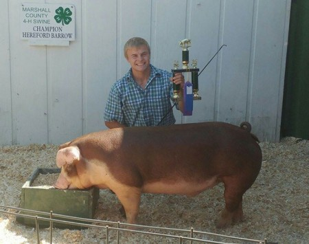 Champion Hereford Barrow