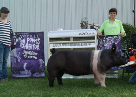 Champion-High-Point-Gilt---2015-IJSC---ty-jester---Outlaw