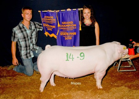 Grand Champion Landrace Gilt