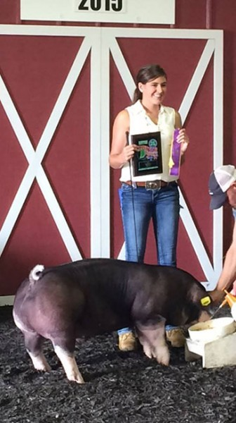 Champion-Poland-barrow-2015-porter-county-fair---Power-Drive---Shown-by-Kevin-Duzan-and-family-bred-by-Jordan-Brothers-Showpigs