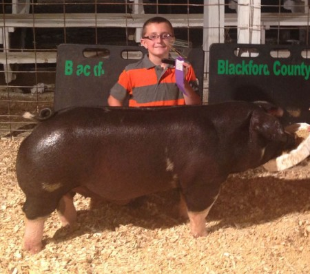 Champion-Spot-Barrow---2015-Blackford-Co---shown-by-Nick-Aulbach---bred-by-Brown-Show-Pigs---placed-by-JRJ-Show-Stock---pur-at-CAS