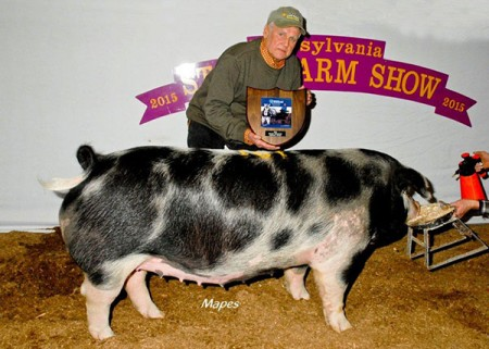 Champion Spot Bred Gilt