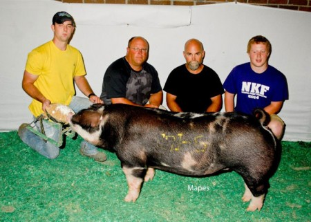 Champion-Spot-Gilt---2015-WPX--sired-by-Game-Changer