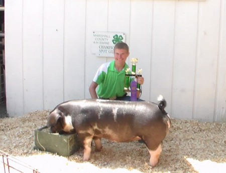 Champion-Spot-Gilt-Marshall-County-Fair-In---Shown-By-Bryce-Swihart---Bred-By-Brown-Show-Pigs---Game-Changer