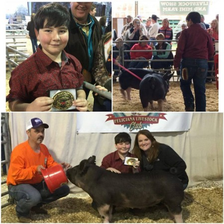Champion AOB Gilt