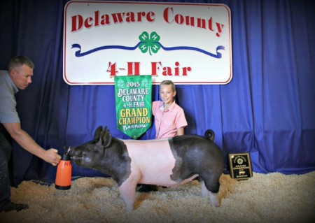 Grand-Champion-Barrow-Overall-2015-Delaware-Co---Lauren-Nixon---bred-by-us---purchased-online
