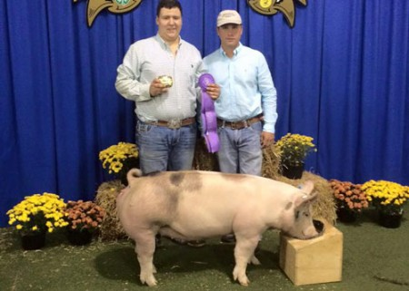Grand-Champion-Gilt---Franklin-Co,-GA---Warrior---Connor-Cleveland