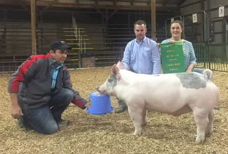 Grand-Champion-Overall---2015-South-Bend-Friday-Night-Classic---sired-by-Bates-Motel---Shown-by-Hodupp---bred-by-Shaffer's