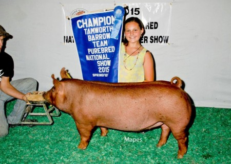 Grand-Champion-Tamworth-Barrow---2015-Team-Purebred---Record-Breaker---Rylie-Koopman--bred-by-us-purchased-online