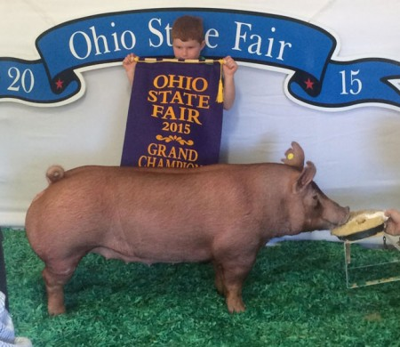 Grand-Champion-Tamworth-Gilt---2015-OH-State-Fair---Record-Breaker---Lucas-Bradshaw---purchased-online