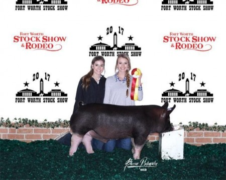 Res Champion Dark OPB - 17 Forr Worth Stock Show - Triple Threat - sb Fallon Ferguson - rb Kneese Show Pigs