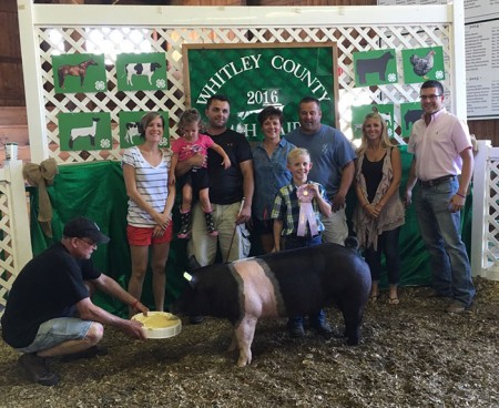 Reserve Hampshire Gilt