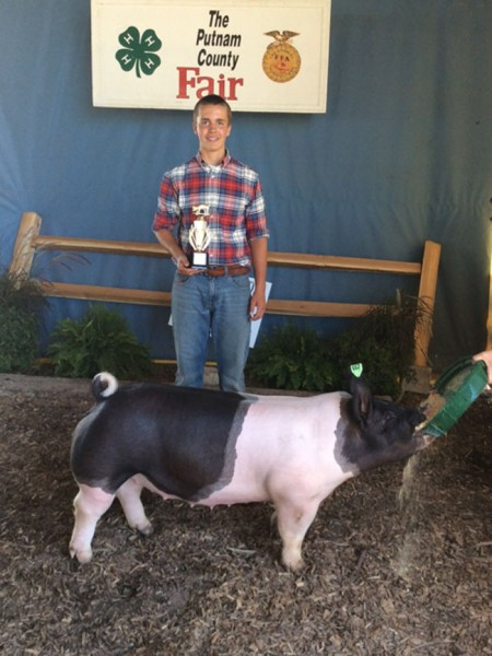 Reserve Middleweight Gilt