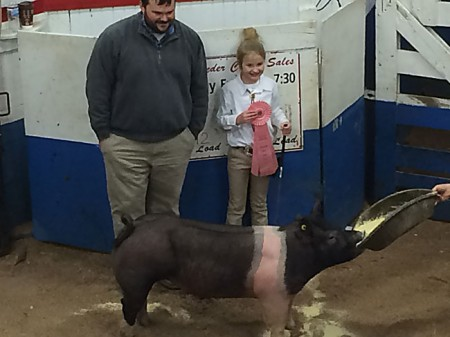 Reserve-Champion---2015-Washington-Co-MD---bred-by-Hamby's
