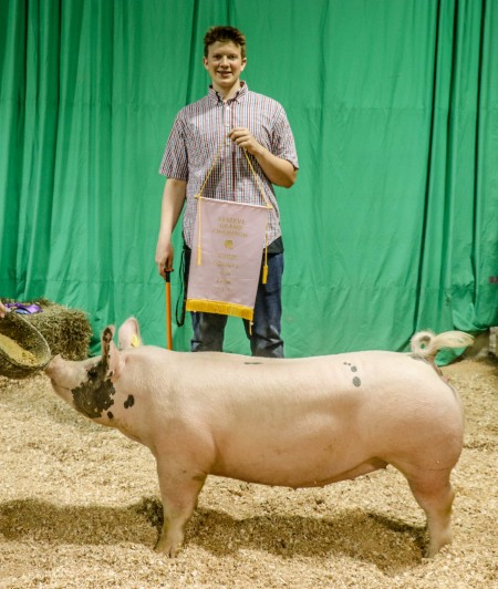 Reserve Champion Breeding Gilt