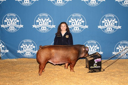 Reserve-Champion-Duroc-Barrow-2015-OYE---sired-by-Throne---bred-by-Dalainna-Beard---bred-by-the-Beard-Family
