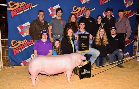 Reserve-Champion-Landrace-Barrow---2015-San-Antonio-Stock-Show