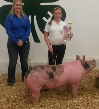 Reserve-Grand-Champion-2015-Barbour-Co-Fair,-WV-sired-by-Warriorbred-by-Tasha-Harris