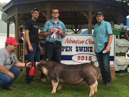 Reserve-champion-Poland-barrow-2015-Newton-county-open-show--power-drive--Shown-by-jarred-stone-bred-by-Jordan-brothers-Showpigs