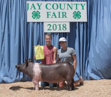 4th Overall and Champion Hampshire Gilt