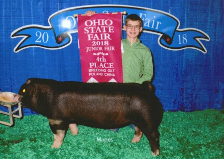 4th Overall Gilt and Champion Poland