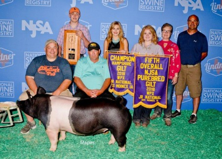 Champion Hampshire Gilt and 5th Overall