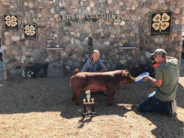 5th Overall and Reserve Duroc Gilt