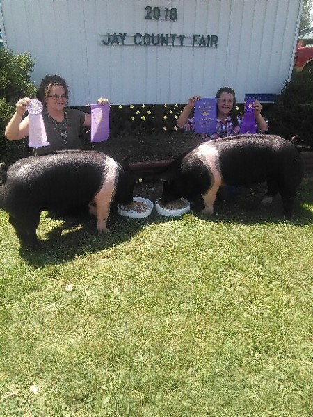Champion and Reserve Champion Hampshire Barrows