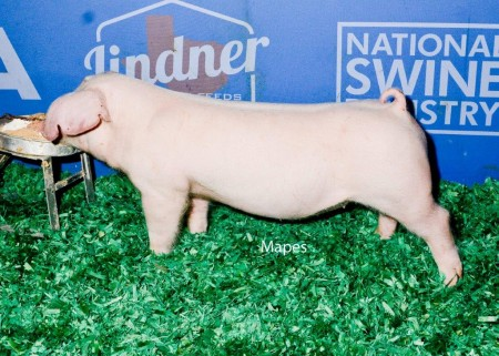 Reserve Champion Weanling Male